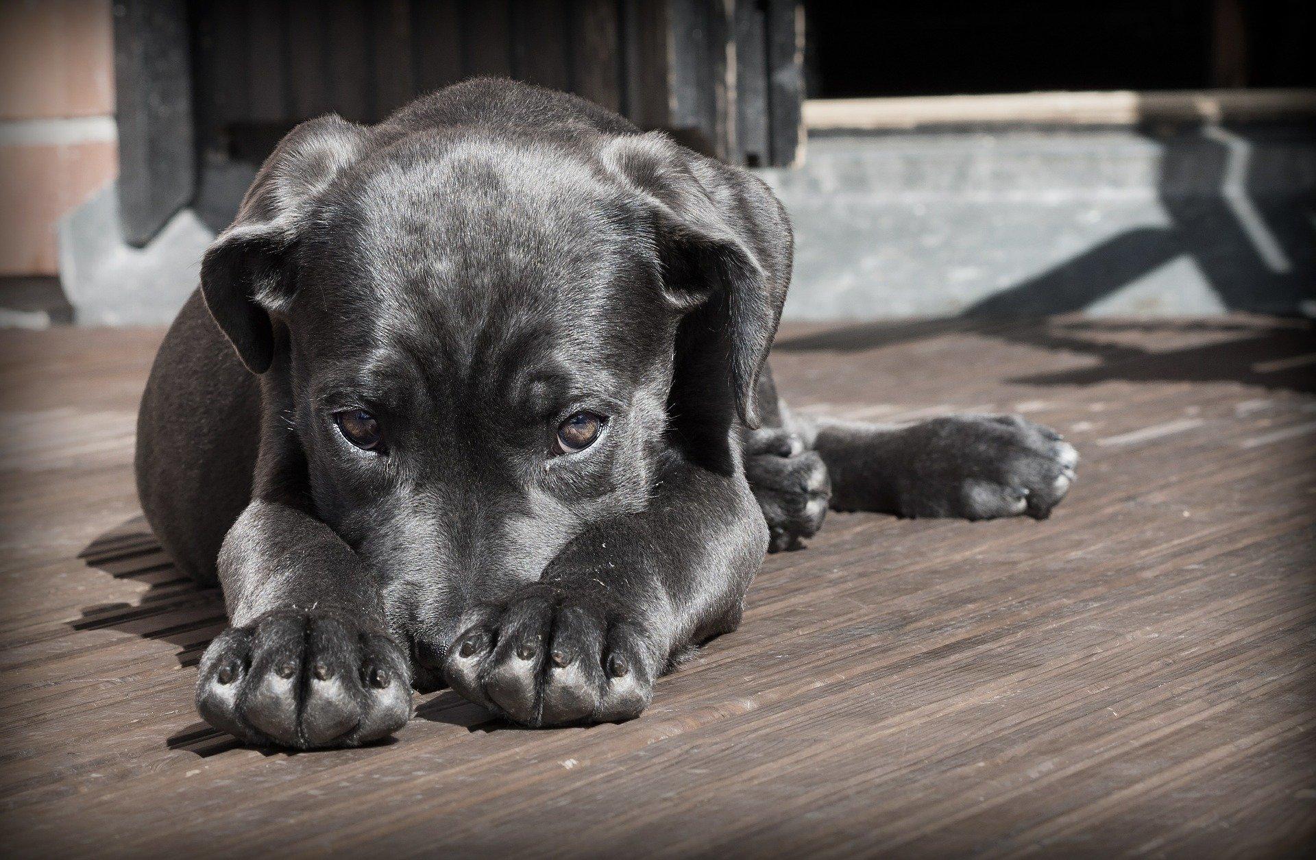 dog-423398_1920
