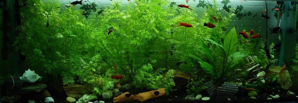 velké akvárium